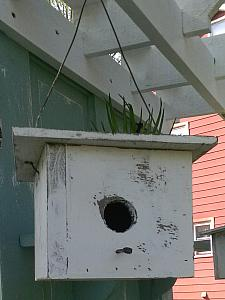 Hanging Birdhouse with flat roof